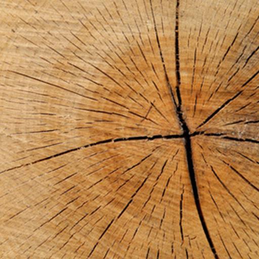 Holz & Werkzeuge